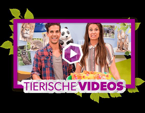 Tierische Videos